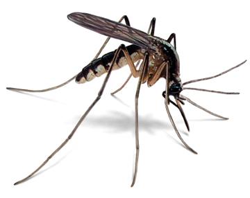 mosquito-management
